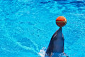 Sweet dolphin is playing with ball Royalty Free Stock Image