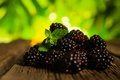 Sweet fresh blackberry in the wood bawl Stock Photos