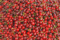 Sweet fresh cherries heap scattered closeup, fruit background Royalty Free Stock Photo