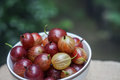 Sweet fresh cherries with water trops Royalty Free Stock Photo
