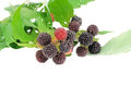 Sweet fresh raspberry fruit on white Royalty Free Stock Photos