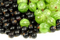 Sweet  gooseberries and blackberries Royalty Free Stock Photos