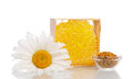 Sweet honey comb and white daisy flower on white background Stock Photo