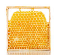 Sweet honeycombs with honey Royalty Free Stock Photo