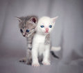 Sweet hug two fun kittens in cute hugging Royalty Free Stock Images