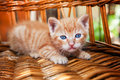 Sweet kitten resting Royalty Free Stock Photo