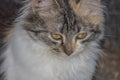 sweet kitty Royalty Free Stock Photo