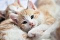 Sweet kitty look at camera Royalty Free Stock Photo