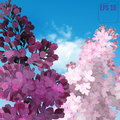 Sweet Lilac on the blue-sky background. Vector Lilac flowers, bl