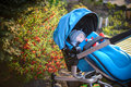 Sweet little baby boy sleeping in stroller in autumn park . Royalty Free Stock Photo