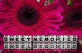 Sweet memories message with flowers Royalty Free Stock Photo