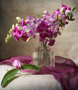 Sweet peas Royalty Free Stock Photo