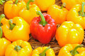 Sweet peppers in organic farms at northen thailand Stock Image