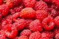 Sweet raspberry fruit a beautiful selection of freshly picked ripe red raspberries Stock Photo