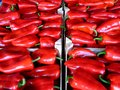 Sweet red peppers, packed and ready for sale as well as preparing many specialties and red pepper products Royalty Free Stock Photo