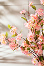 Sweet smelling spring flowers in the kitchen plants Royalty Free Stock Images