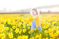 Sweet toddler girl field of yellow daffodil flowers beautiful curly in a blue dress playing in a on a sunny summer evening Royalty Free Stock Photos