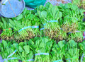 Sweet vegetable market Royalty Free Stock Photos