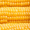 Sweetcorn background Royalty Free Stock Photo