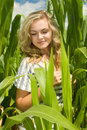 Sweetcorn field Royalty Free Stock Photo