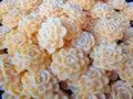 Sweetie cookie thailand food thai look like Stock Images