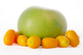 Sweetie and kumquats Stock Image
