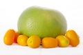 Sweetie and kumquats Stock Image