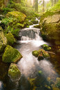 Swift mountain stream in a green valley Royalty Free Stock Photo
