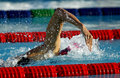 Swim competition male swimmer swimming crawl in a pool Stock Images