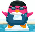 Swimmer penguin Stock Photo