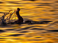 Swimmer in sunset Royalty Free Stock Photo