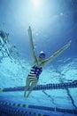 Swimmer Wearing U.S Swimsuit In Pool