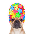 Swimming cap dog Royalty Free Stock Photo