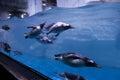 Swimming penguin underwater Royalty Free Stock Photo