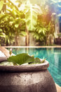 Swimming pool area with decoration bowl with water lily among lush tropical garden with sunshine at private luxury tropical villa Royalty Free Stock Photo