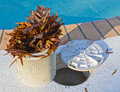 Swimming Pool Basket Cleaner Royalty Free Stock Images