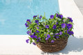 Swimming pool and flower fresh Royalty Free Stock Photos