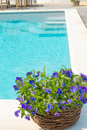 Swimming pool and flower fresh Royalty Free Stock Image