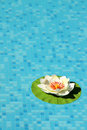 Swimming pool with lotus flower Stock Photo