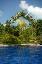 Swimming pool next to verdant palm and other trees and vegetation alluring lush blue sky Stock Image