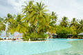 Swimming pool with palm trees Royalty Free Stock Images