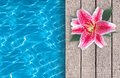 Swimming pool and pink lily on wooden deck ideal for backgrounds Royalty Free Stock Image