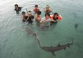 Swimming with sharks shark at karimun jawa breeding Royalty Free Stock Images