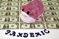 Swine flu pandemic pink pig with surgical mask representing on a sheet of us dollars and the word Stock Photos