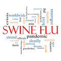 Swine flu word cloud concept with great terms such as fever asia pandemic outbreak and more Royalty Free Stock Images