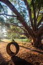 Swing tire tree playtime play attached to rope for childrens or kids outside the home in summer Stock Image