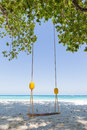 Swing under a tree on the beach close to sea sunny weather Royalty Free Stock Photo