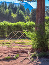 Swings in the forest in summer colonia switzerland rural district of bariloche argentina Stock Photos