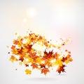 Swirl of maple leaves autumn Stock Image