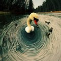 Swirly swan swimming in cold water Stock Photography